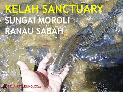 Kelah Sanctuary Sungai Moroli Ranau Sabah