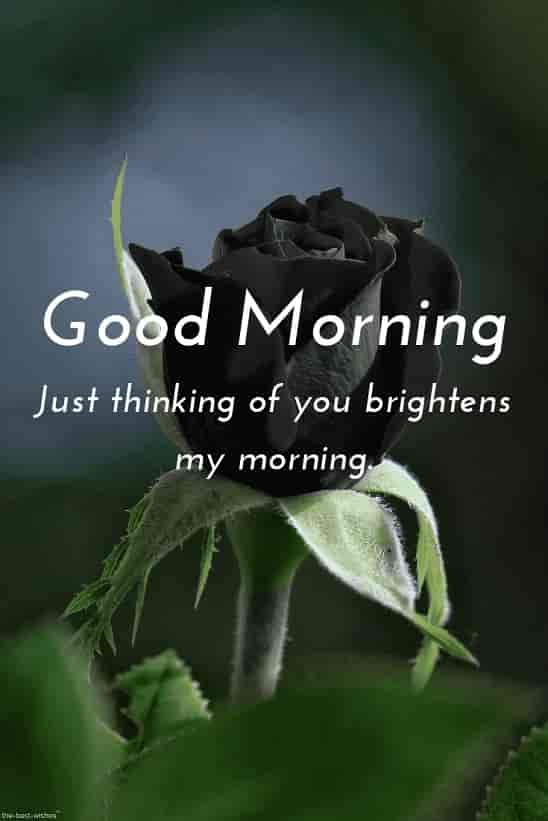 good morning romantic msg for her with hd black rose