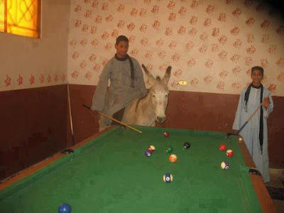 Lustige Billard Bilder auf Esel reiten und spielen