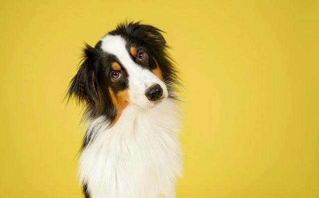 Los perros pueden reconocer palabras aunque las diga un desconocido: estudio
