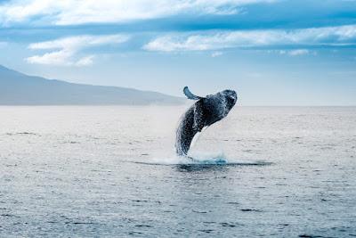 Observer les baleines à Reykjavík