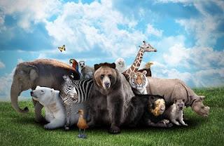 जानवरों के नाम