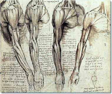 Didáctica de las artes plásticas: El estudio anatómico
