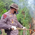 Kapolda Aceh Apresiasi Pemusnahan Ladang Ganja di Aceh Utara
