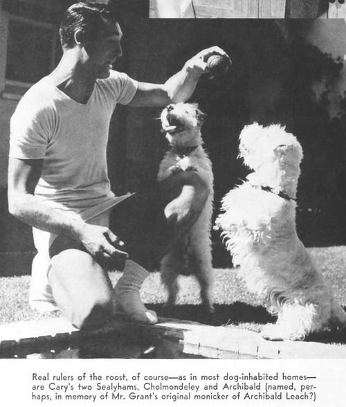 Cary Grant and his dogs