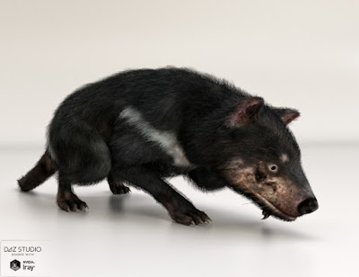Tasmanian Devil by AM