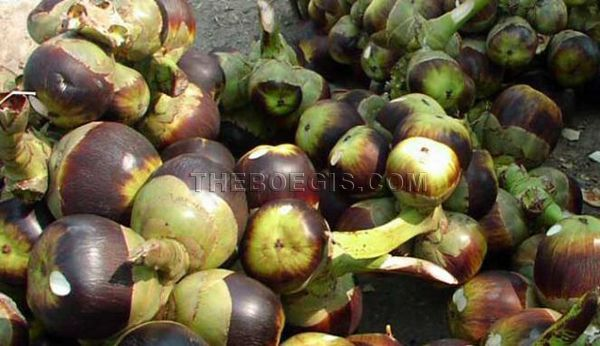 Benefits of Lontar fruits for body health