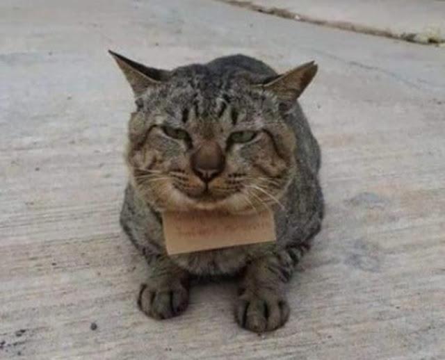 Хозяин три дня искал пропавшего кота, а тот вернулся сытый и с трогательной запиской