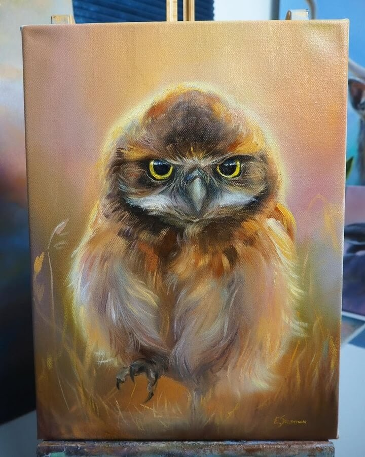 02-Burrowing-owl-Eve-Sundown-www-designstack-co