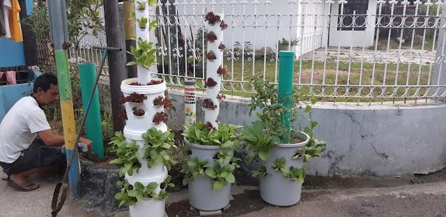 Sayuran organik hasil pemupukan di area ZWC