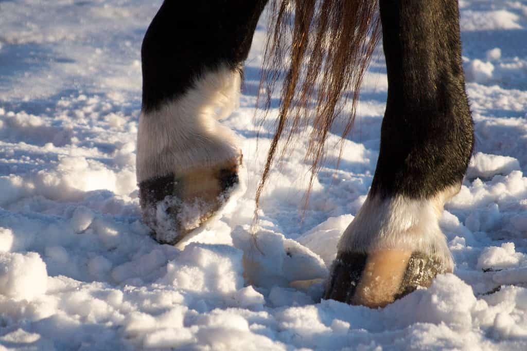 The Horse's Hoof: 7 Major Parts and 6 Signs of Problems