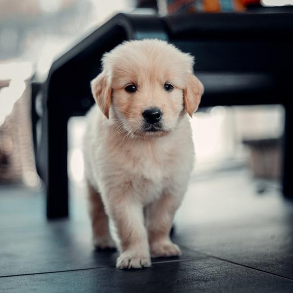 beautiful Animal Photos, Lovely Puppy Pics,