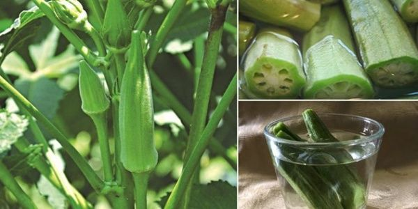 4 Health Benefits of Drinking Okra Water and How to Make Your Own at Home