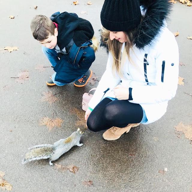 Hyde Park Squirrels