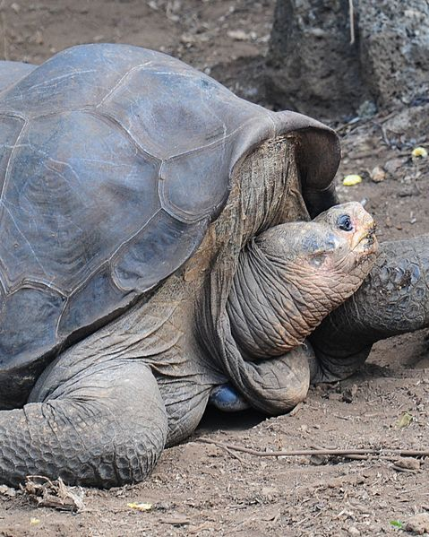 lonesome-george-list-trend
