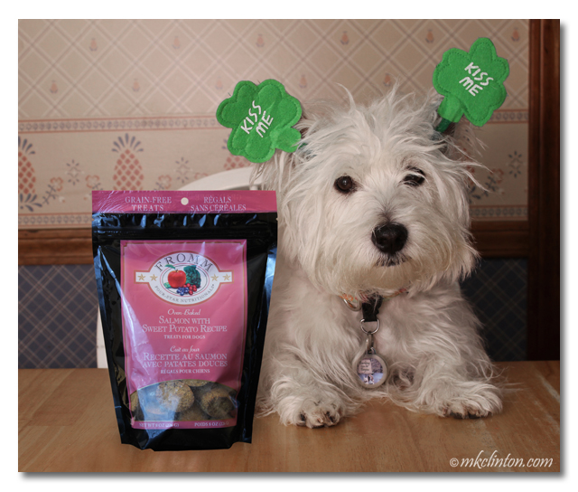 Pierre Westie is enjoying St. Patty's with Fromm treats
