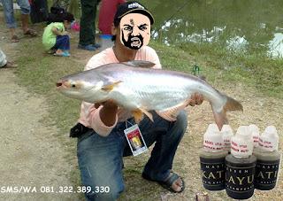 Essen Katilayu Ikan Patin Khusus Galatama