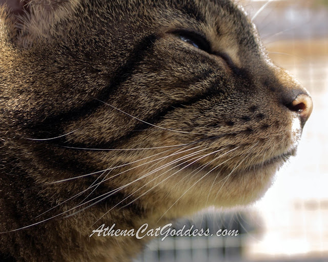 close up of cat whiskers side profile