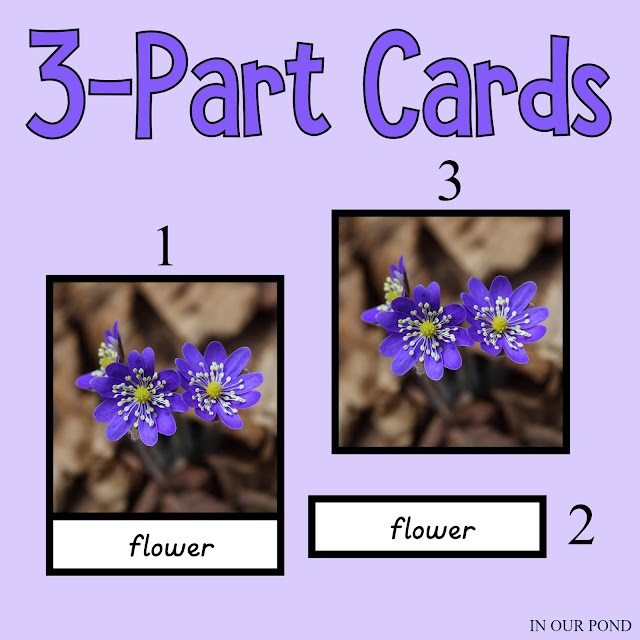 Montessori 3-Part Card Printables from In Our Pond #montessori #homeschool #freeprintables #homeschooling #montessoriathome #montessorihomeschool #montessorischool #printables