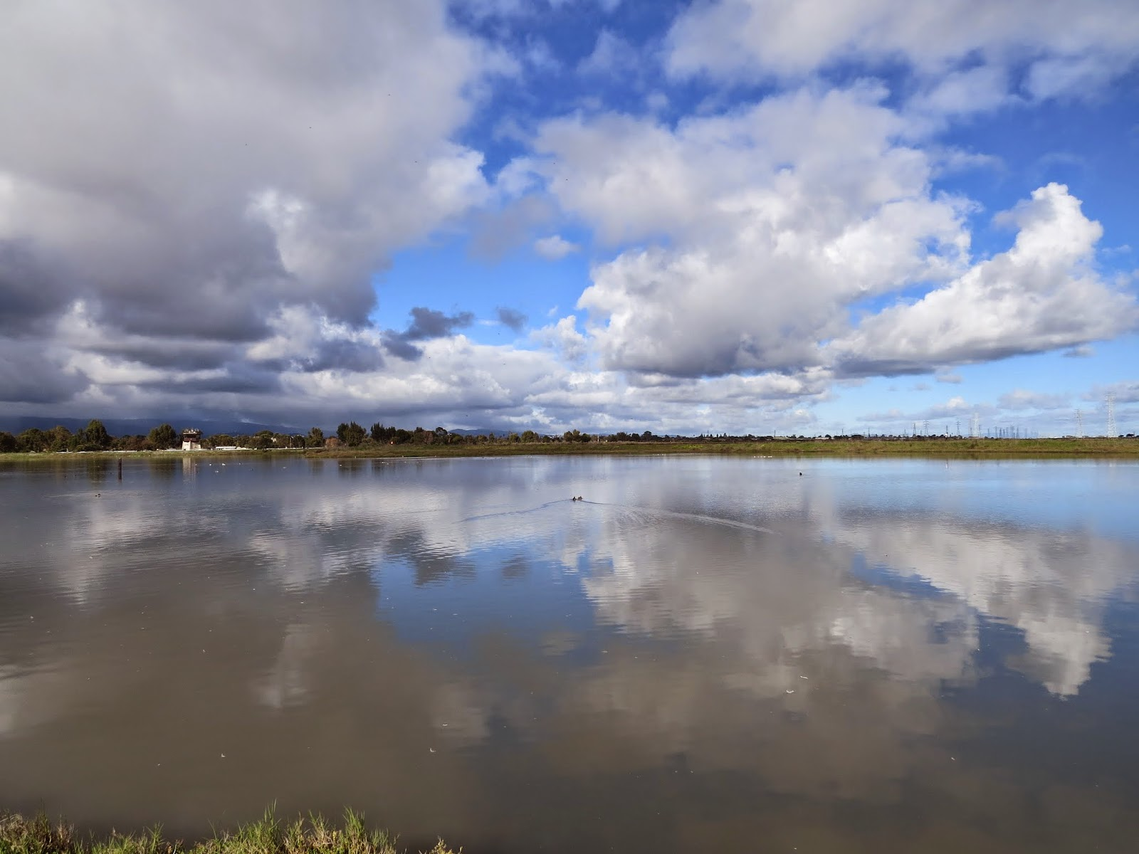 Cloud reflections on the wetlands at the Palo Alto Baylands