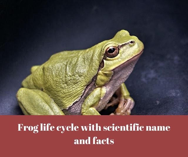 Frog life cycle with scientific name and facts