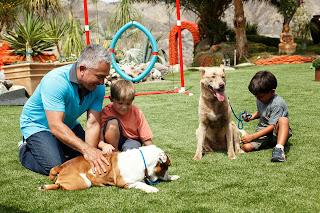 césped artificial especial para mascotas por el encantador de perros