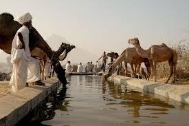 राजस्थान के प्रमुख पशु मेले | Rajasthan Ke Mele Part 6