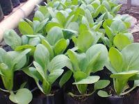 Polybag, Pilihan Tepat Untuk Pembibitan dan Bertanam