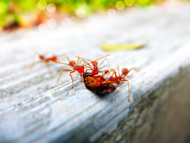 Tips to hire pest control services in Klang Valley