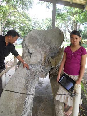 hip bone of a massive fish