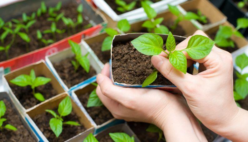Aprenda a fazer uma horta medicinal em casa