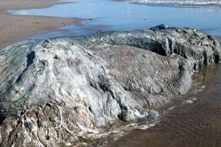Panic as Mysterious 4-metre Long Sea Monster is Found Dead on Beach, Confusing Experts (Photos)