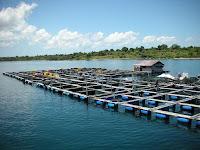 Yuk Kenali Ragam Keramba Jaring Apung Dengan Waring Ikan