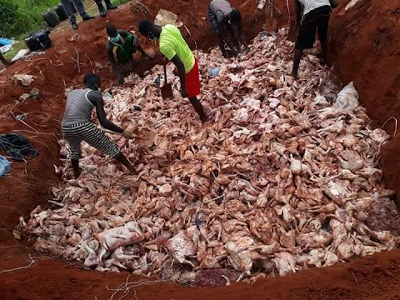 seized poultry products customs