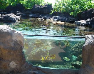 Desain Aquarium Outdoor Tampak Elegan
