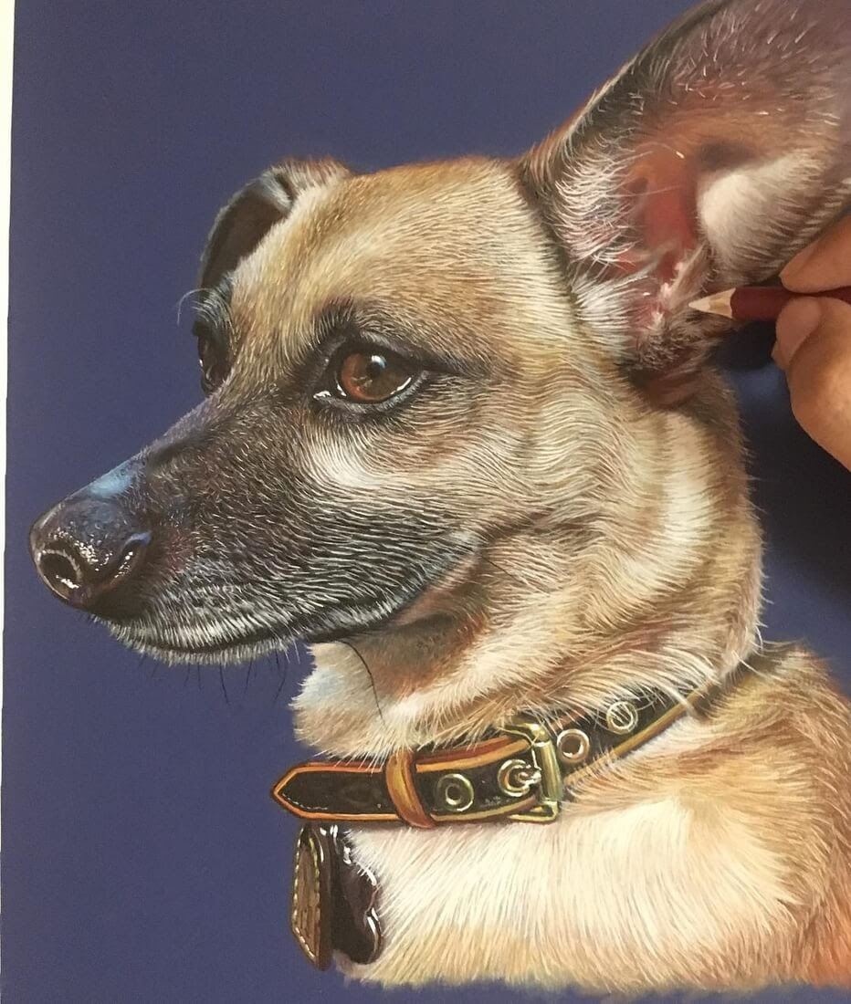 10-Chiweenie-Ivan-Hoo-Domestic-and-Wild-Animal-drawings-and-paintings-www-designstack-co