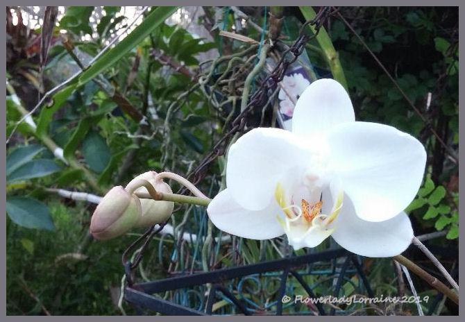 FlowerLady's Musings: Spirit Lifters
