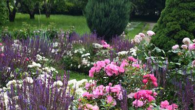 Прогулка по парку Коломенское. Лето 2017. Красивые цветы, розы. Вдохновение и пленэр в парке. Зарисовки художника. Красивые фотографии