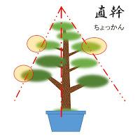 直幹樹形の基本