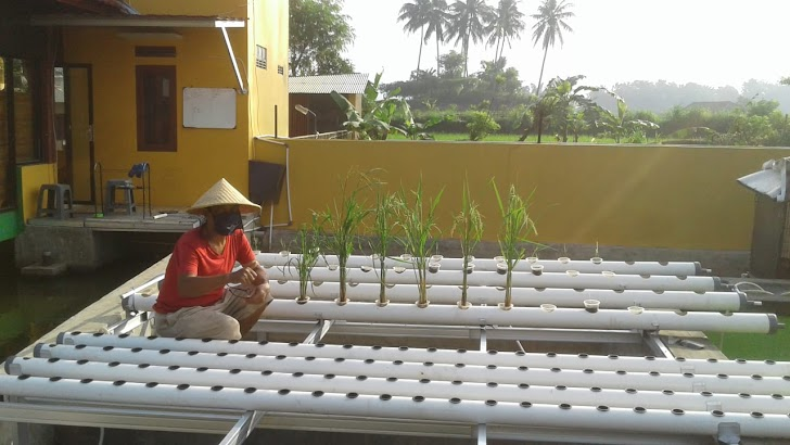 Prawita GENPPARI, Program Paket Panas Tingkatkan Produktivitas Pekarangan Rumah dan Lahan Terlantar