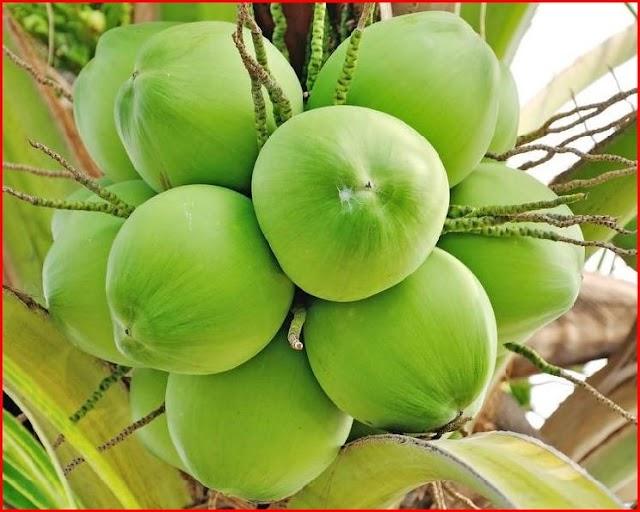 सेहत के लिए रामबाण है नारियल का पानी, फायदे जानकर रह जाएँगे दंग