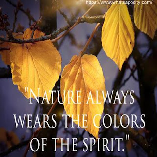 nature-images