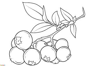 Sketsa-Buah-Blueberry
