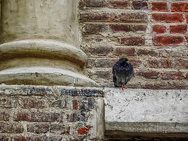 Una paloma en una cornisa en espera.