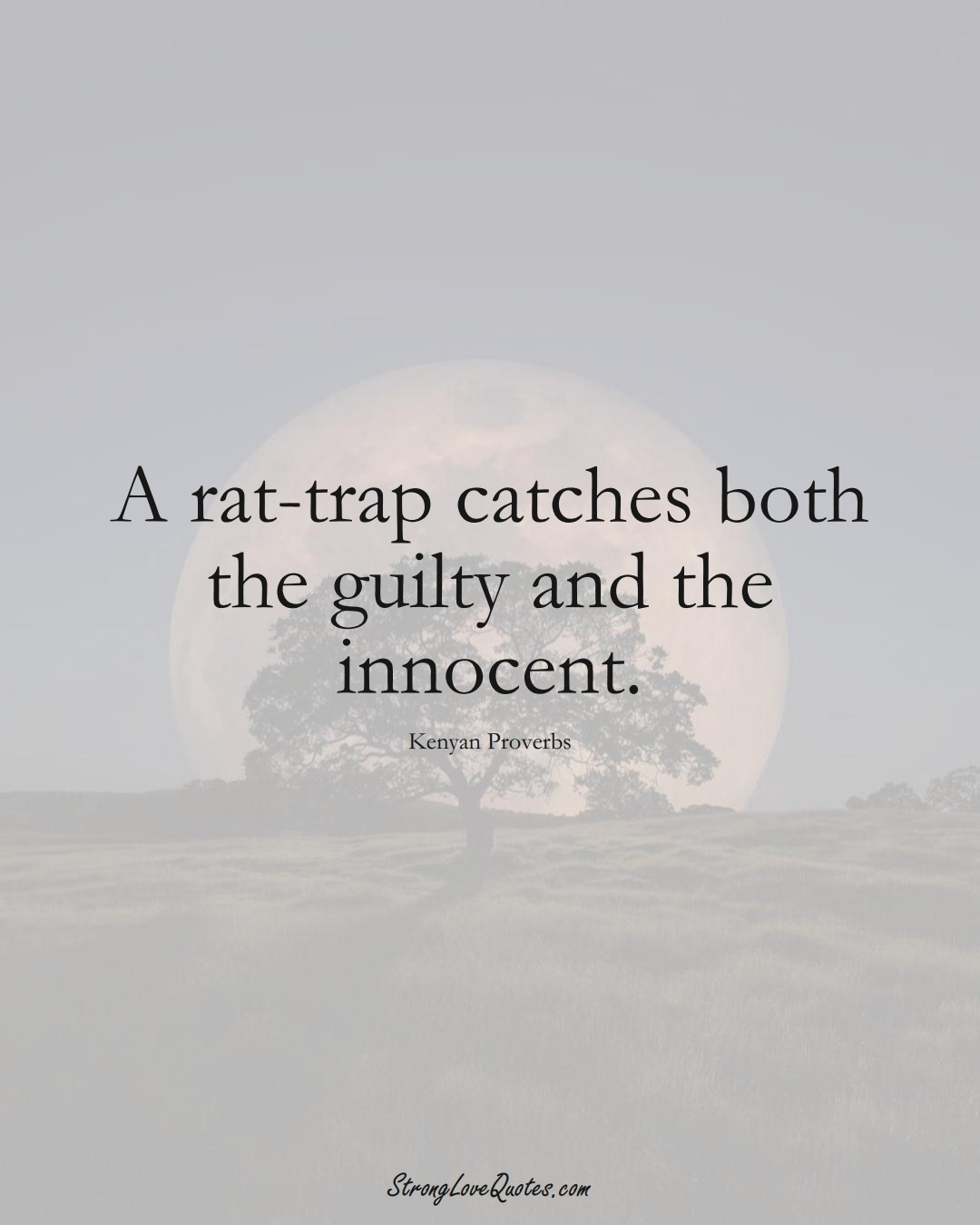 A rat-trap catches both the guilty and the innocent. (Kenyan Sayings);  #AfricanSayings