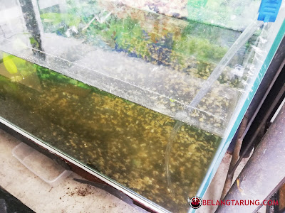 Tukar Air Ikan Kerap