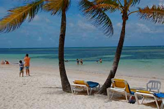 ocean beach Palm Tree Beaches Punta Cana dominican republic