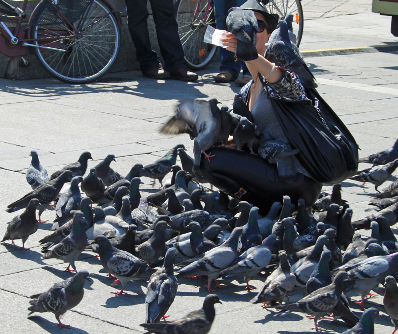 The World Belongs to the Pigeons Now