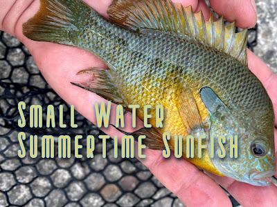 Longear Sunfish, Redbreast Sunfish, Sunfish on the Fly, Fly Fishing for Sunfish, Texas Fly Fishing, Fly Fishing Texas, Frio River, Fly Fishing the Frio River