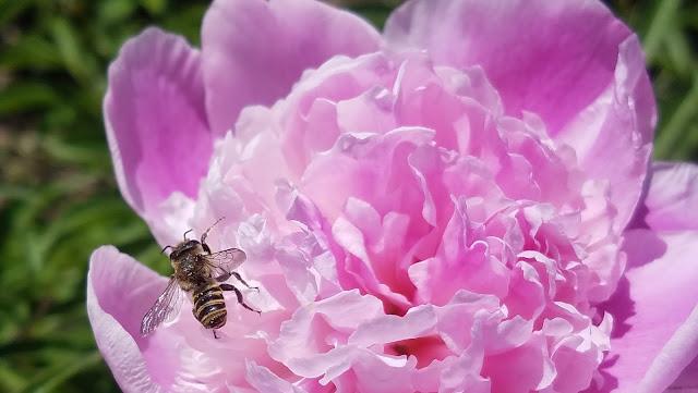 цветы и букашки,